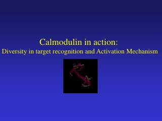 Calmodulin in action:  Diversity in target recognition and Activation Mechanism