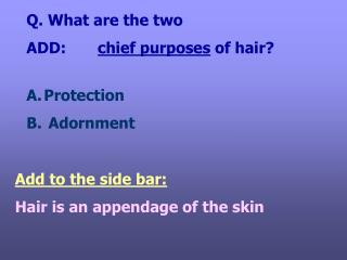 Q. What are the two  ADD:        chief purposes  of hair?