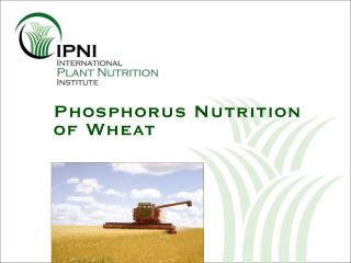Phosphorus Nutrition of Wheat
