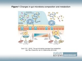 Figure 1  Changes in gut microbiota composition and metabolism