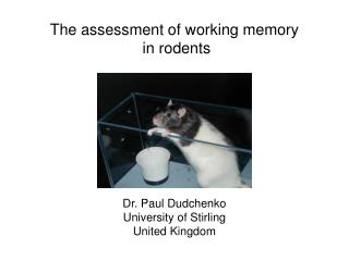 The assessment of working memory  in rodents