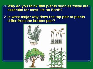 Why do you think that plants such as these are essential for most life on Earth?