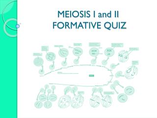 MEIOSIS I and II  FORMATIVE QUIZ