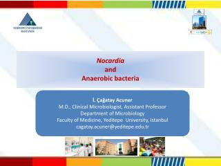 Nocardia  and  An aerobic bacteria