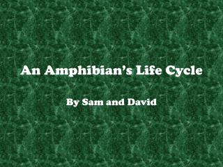 An Amphibian's Life Cycle