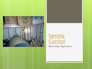 Termite Control – Real Help, Right Now