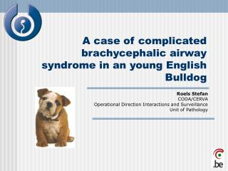 A case of complicated brachycephalic airway syndrome in an young English Bulldog