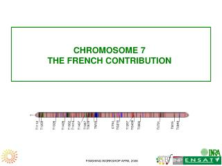 CHROMOSOME 7 THE FRENCH CONTRIBUTION