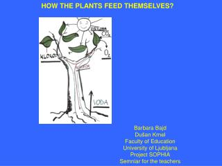 HOW THE PLANTS FEED THEMSELVES?
