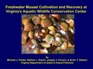Freshwater Mussel Cultivation and Recovery at Virginia's Aquatic Wildlife Conservation Center