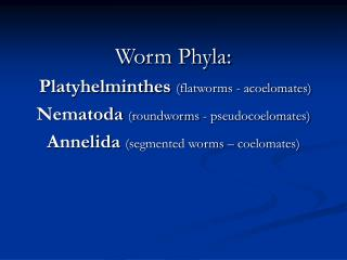 Worm Phyla: Platyhelminthes  (flatworms - acoelomates) Nematoda  (roundworms - pseudocoelomates)