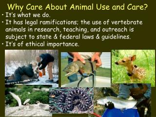 Why Care About Animal Use and Care?