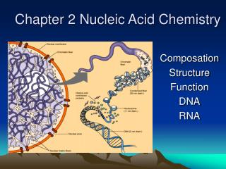 Chapter 2 Nucleic Acid Chemistry