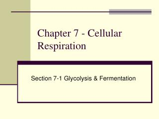 Chapter 7 - Cellular Respiration