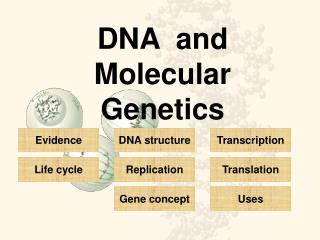 DNA  and Molecular Genetics