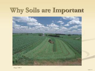 Why Soils are Important