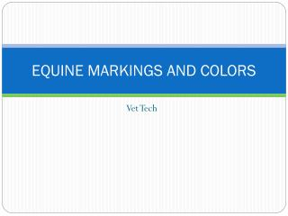 EQUINE MARKINGS AND COLORS