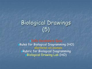 Biological Drawings  5