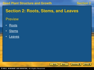 Section 2: Roots, Stems, and Leaves