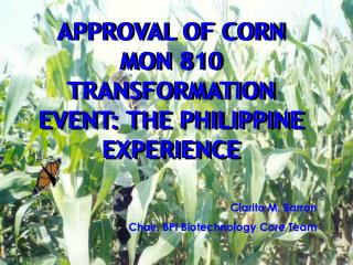 APPROVAL OF CORN MON 810 TRANSFORMATION EVENT: THE PHILIPPINE EXPERIENCE