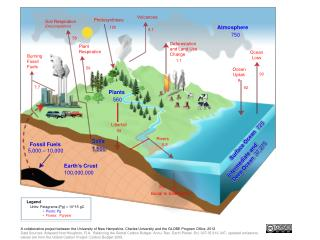 Soil Respiration (Decomposition)