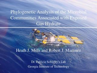 Phylogenetic Analysis of the Microbial Communities Associated with Exposed Gas Hydrate