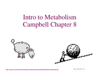 Intro to Metabolism Campbell Chapter 8