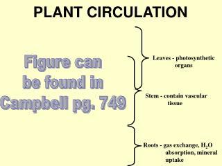 PLANT CIRCULATION