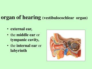 organ of hearing (vestibulocochlear organ)