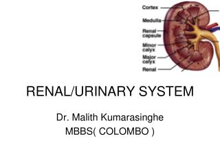 RENAL/URINARY SYSTEM