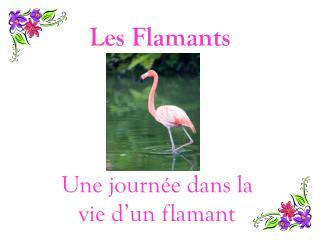 Les Flamants