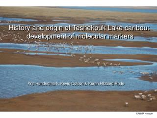 History and origin of Teshekpuk Lake caribou:  development of molecular markers