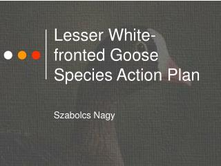 Lesser White-fronted Goose Species Action Plan
