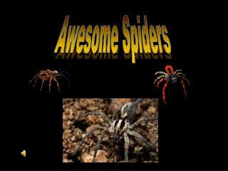 Awesome Spiders