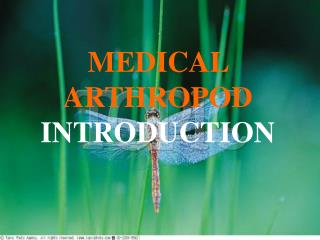 MEDICAL  ARTHROPOD INTRODUCTION