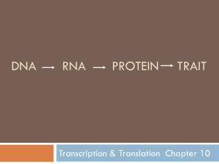 DNA RNA Protein Trait