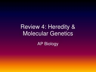 Review 4: Heredity & Molecular Genetics