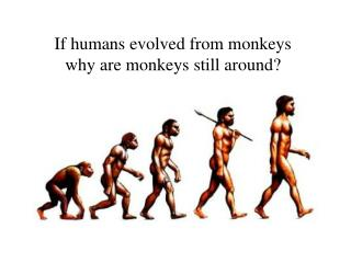 If humans evolved from monkeys why are monkeys still around?