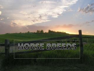 HORSE BREEDS
