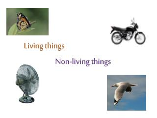 Non-living things