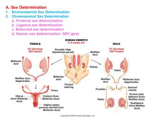 A. Sex Determination Environmental Sex Determination Chromosomal Sex Determination