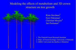Modeling the effects of metabolism and 3D crown structure on tree growth