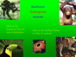 Rainforest Endangered Animals