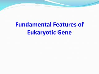 Fundamental Features of Eukaryotic Gene