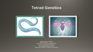 Tetrad Genetics
