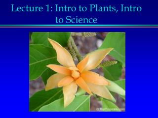 Lecture 1: Intro to Plants, Intro to Science