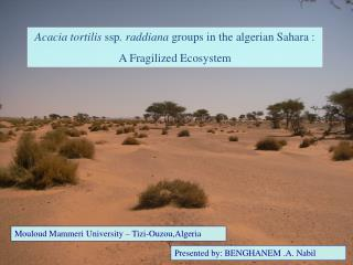 Acacia tortilis  ssp . raddiana  groups in the algerian Sahara :  A Fragilized Ecosystem