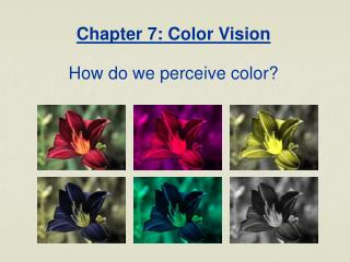 Chapter 7: Color Vision How do we perceive color?