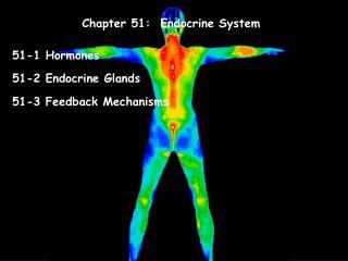 Chapter 51:  Endocrine System