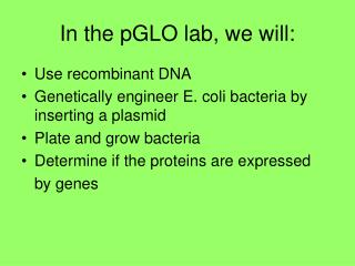 In the pGLO lab, we will:
